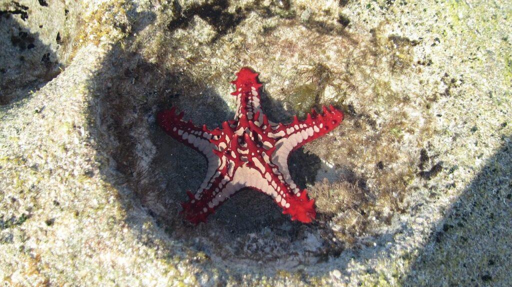 starfish 431768 1280 1