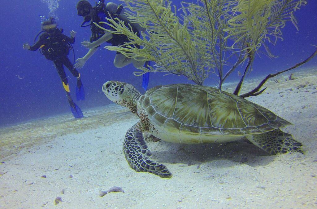 turtle 588497 1280