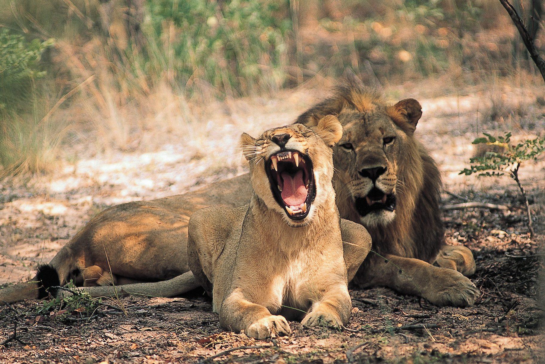 ent-lions
